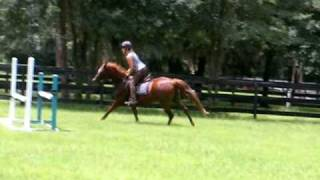 "(sold) Cliche's ""extreme Make-over"": Jumping W/ Running Martingale (part 3b)"