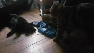 Вязка с кошкой Линдой