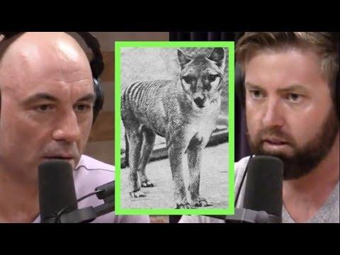 Searching For The Tasmanian Tiger | Joe Rogan & Forrest Galante
