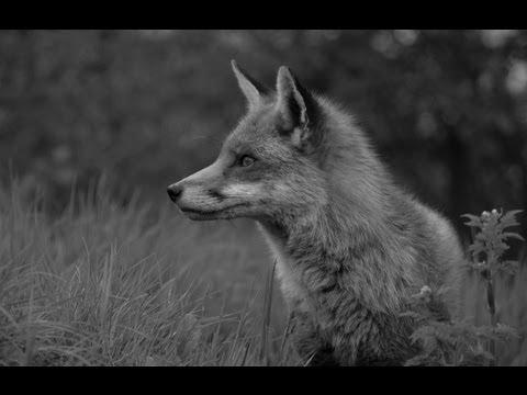 The Shooting Show -- Skye fox shooting special