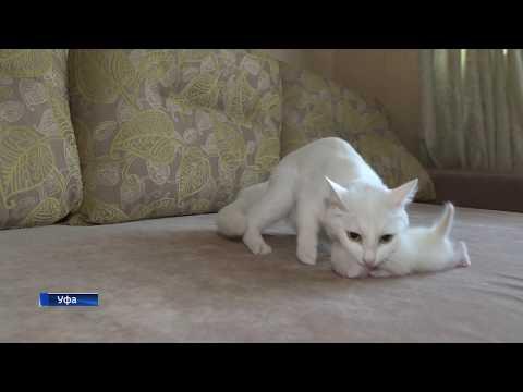Вопрос: Почему кошки лезут в кроватку к больному ребенку?
