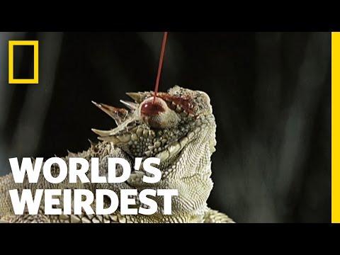 Blood Shooting Eyes   World's Weirdest