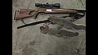 Air Rifle Squirrel Hunt #4 Thumbnail