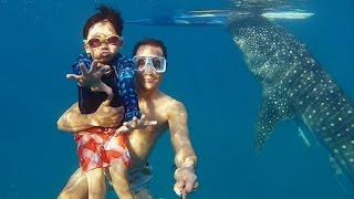GoPro: Whaleshark Dive in the Philippines