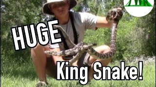 Learn About The Incredible Eastern King Snake!
