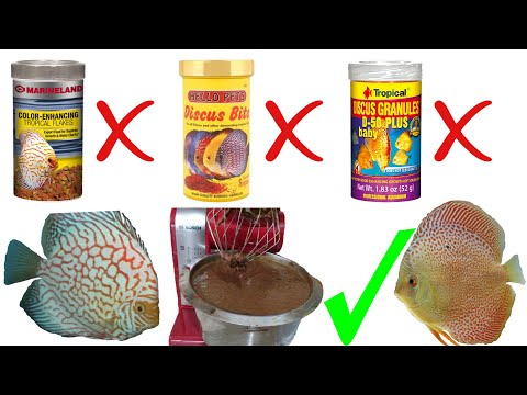 HOW TO: Make DIY fish food - Best recipe - DISCUS FOOD