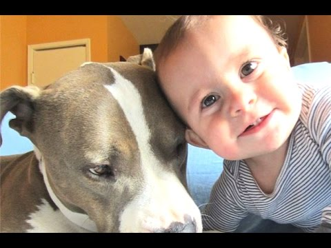 Best Of Babies Laughing Hysterically At Dogs And Cats Compilation 2014 [NEW]