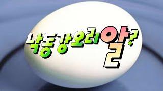 [요리] 오리알과 계란의 비교(요리재료)