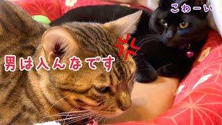 コタツの上の女子会に入ってくる雄猫に激おこベルさん!