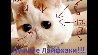 ЛУЧШИЕ КОШАЧЬИ ЛАЙФХАКИ! LIFE HACKS FOR CATS! ТОП ЛАЙФ ХАКОВ