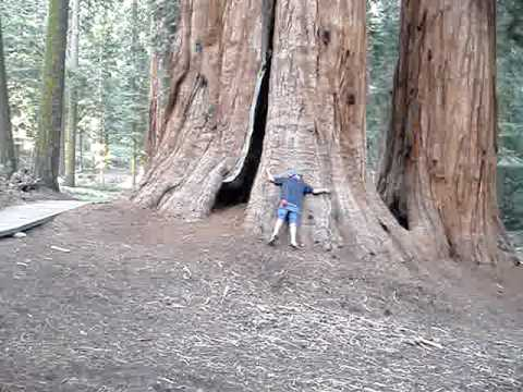 Meeting A Giant Sequoia Redwood For The First Time