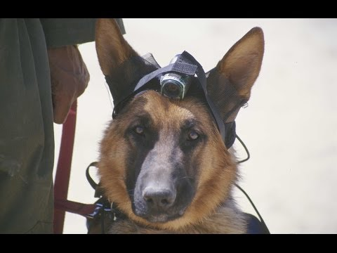 Our World - Dogs of Peace | Storyteller Media