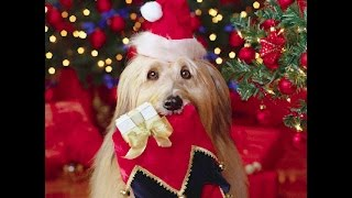 Getting a Puppy for Christmas Compilation 2015 [HD] 5MC