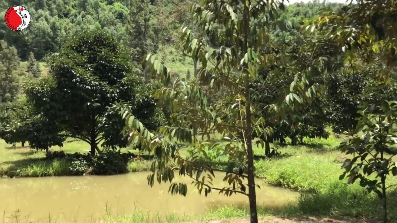 Bán đất vườn Đạ Hoai – Bảo Lộc.Đất cực đẹp,vị trí đắc địa.0969999699