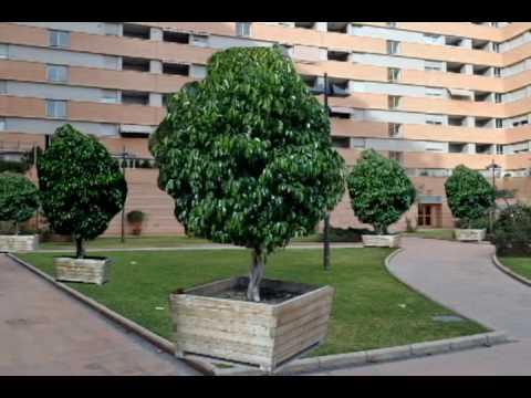 Proyecto para el jardin de la araucaria youtube for Arboles frondosos para jardin