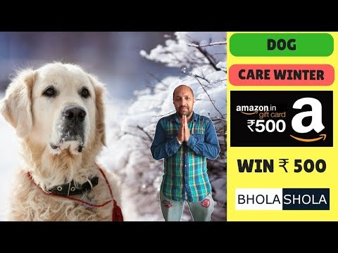 Pet Care - Seven Ways to Protect The Dog This Winter Season - Bhola Shola