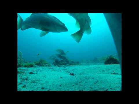 NOAA Ship Pisces Surveys Reef Fish Populations