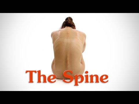 Anatomy of the Spine  for Artists