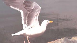 Το τραγούδι της Λίμνης. Ο Γλάρος - Ελένη Καραΐνδρου, Αρλέτα & χορωδία
