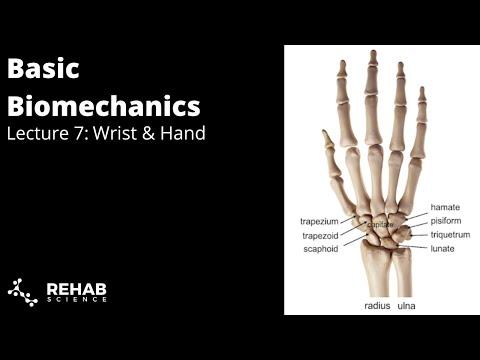 Biomechanics Lecture 7: