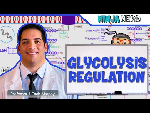 Metabolism | Regulation of Glycolysis