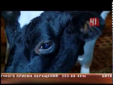 Болеют ли туберкулезом животные