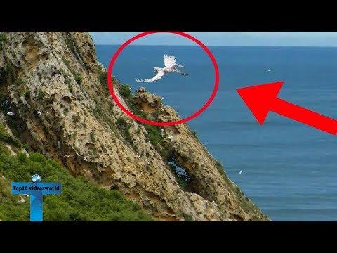 Top 10 Pegasus Caught On Camera   Unbelievable Pegasus Sighting In Real Life