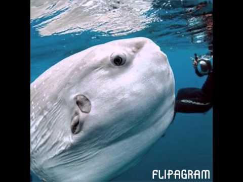 Pesci piu grandi al mondo youtube - Pesci piu comuni in tavola ...