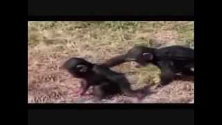 Amazing Animals Fails! Funny!!!