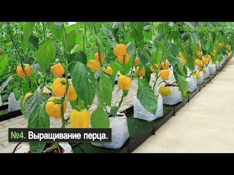 Что выращивать гидропоникой - 8 идей