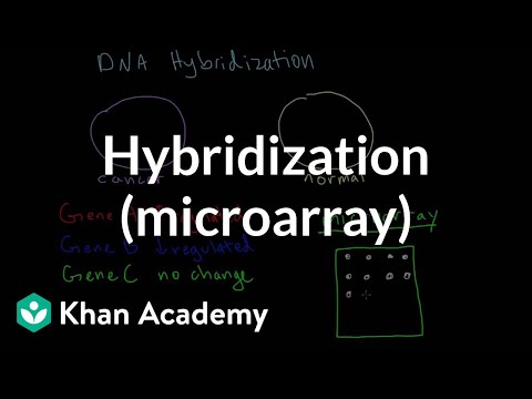 Hybridization (microarray) | Biomolecules | MCAT | Khan Academy