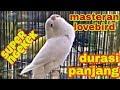 Masteran Lovebird Durasi Panjang Super Ngekek Kicau Mania(.mp3 .mp4) Mp3 - Mp4 Download