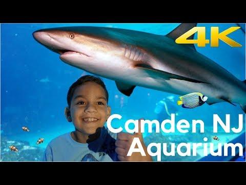 Adventure Aquarium in Camden NJ (in 4k)