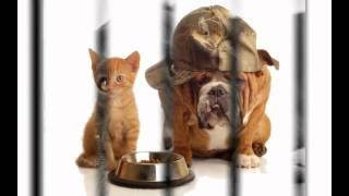 сухий корм для собак(, 2014-10-20T12:09:31.000Z)