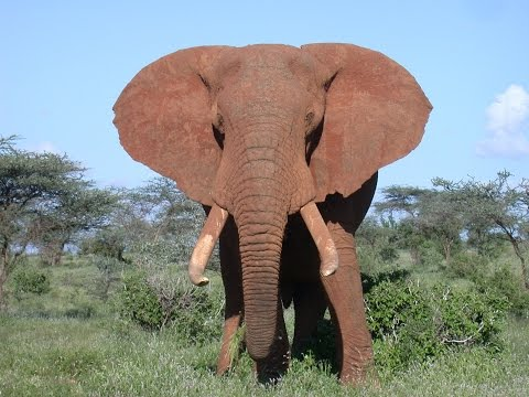 Save the Elephants · Dr. Iain Douglas-Hamilton · Chicago Expo 2015