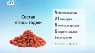 где купить саженцы ягоды годжи
