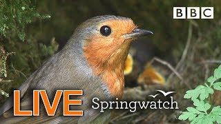 Cute birds and animals streaming cams Day 6 Part 2  | BBC Springwatch