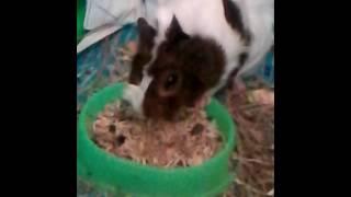 Клип про животных - песня