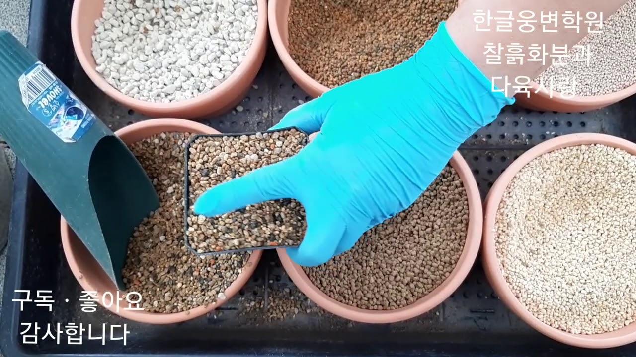 #청운다육농원 #흙 종류 ㆍ비빕밥만들기#하월시아 심는법