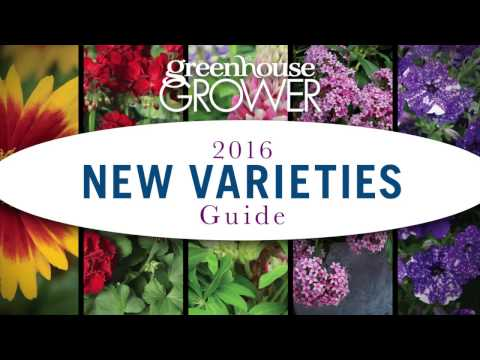 Top New Varieties for 2017
