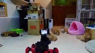 Самые смешные кошки 2016 #16