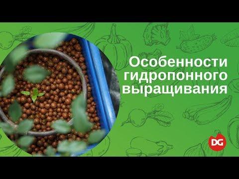 №38 Особенности гидропонного способа выращивания