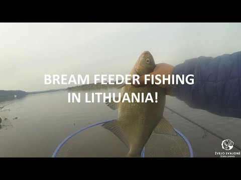 BREAM FEEDER FISHING IN LITHUANIA! WHAT A BITES! (ENG VERSION)