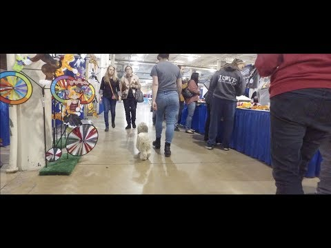 Best Dog Training in Columbus, Ohio! 10 Month Old Havanese Mix, Pierre!