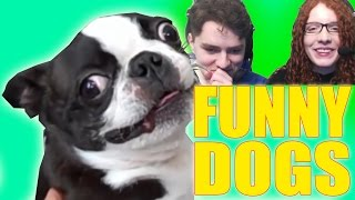 - TRY NOT TO LAUGH Funny Dogs Compilation Challenge