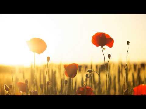 Remembrance Day Tribute - (Slideshow)