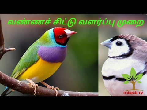 Finches Breeding from YouTube · Duration:  8 minutes 41 seconds