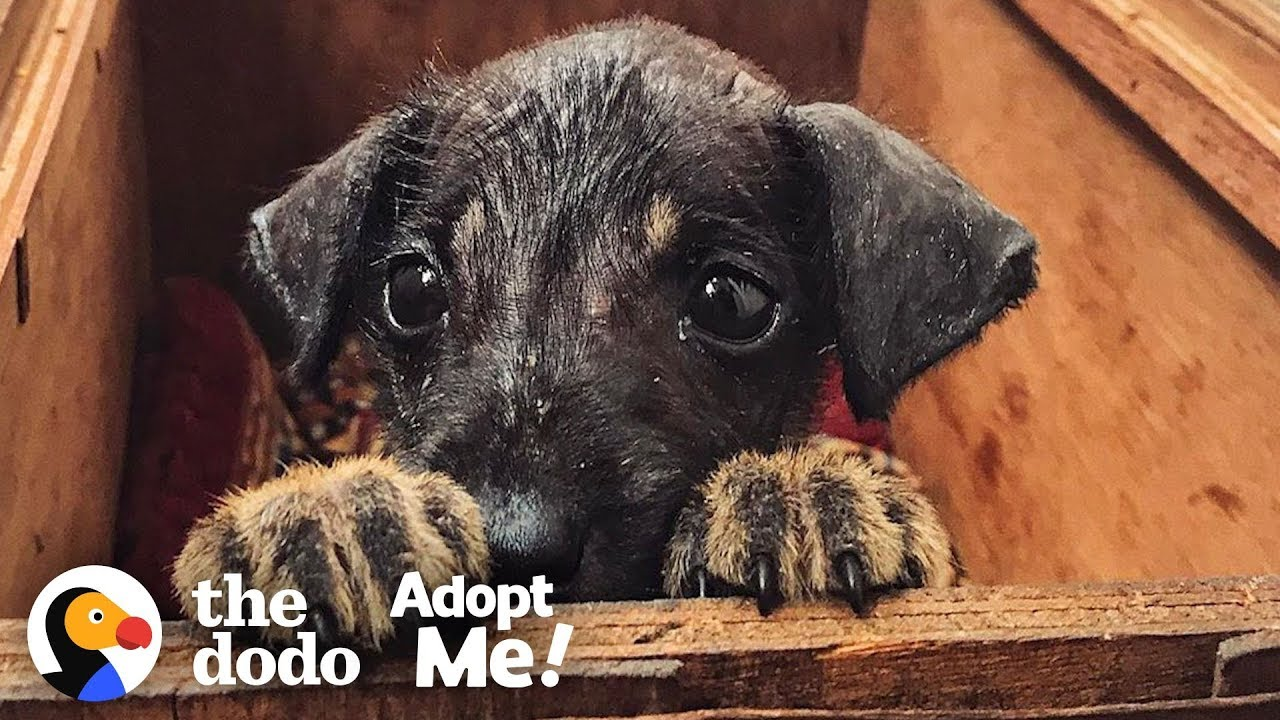 Rescue Puppy In India Is Looking For The Perfect Family To Adopt Him | The Dodo Adopt Me!