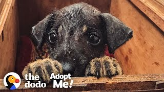 rescue puppy in india is looking for the perfect family to adopt him the dodo adopt me