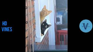 Try Not To Laugh Challenge  Funny Cat And Dog Vines Compilation 2020 #2
